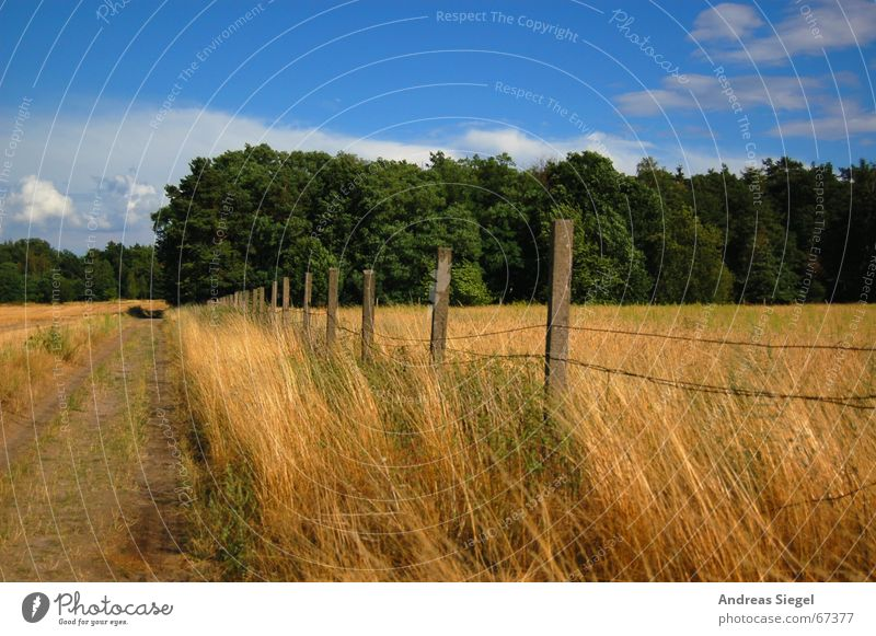 Nature Sky Green Blue Clouds Far-off places Forest Meadow Grass Freedom Field Gold Grain Agriculture Footpath Fence