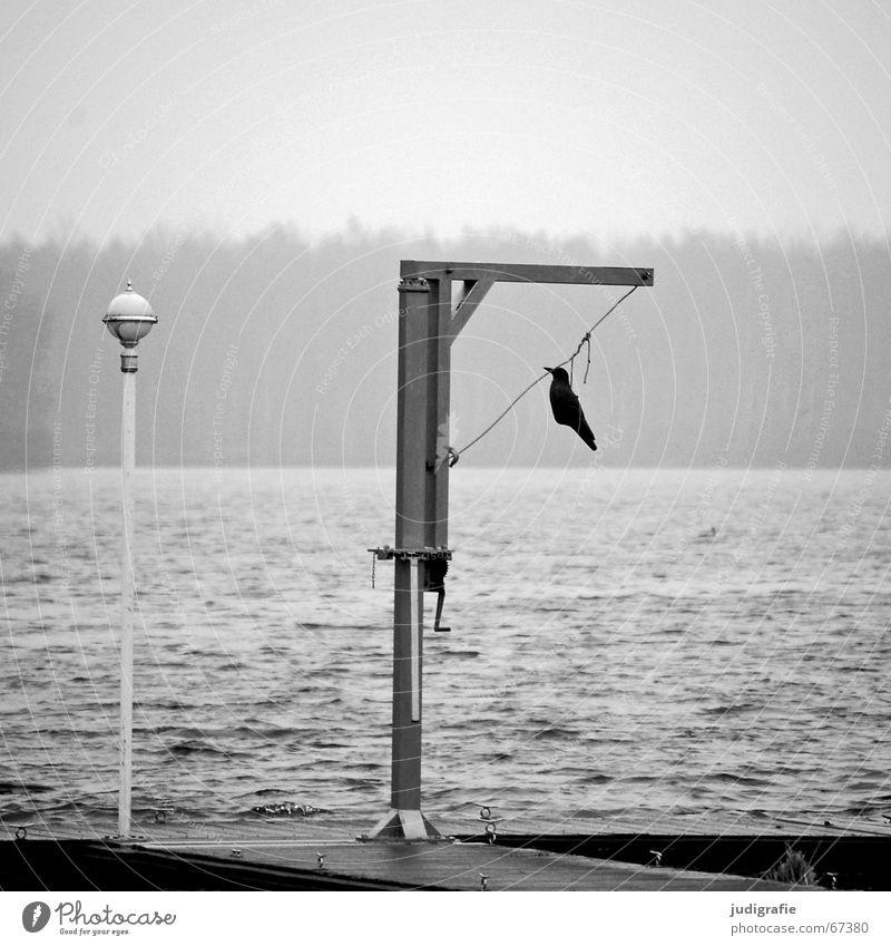 Sky Water Calm Forest Death Gray Lake Lamp Bird Fog Gloomy End Feces Creepy Footbridge Hang
