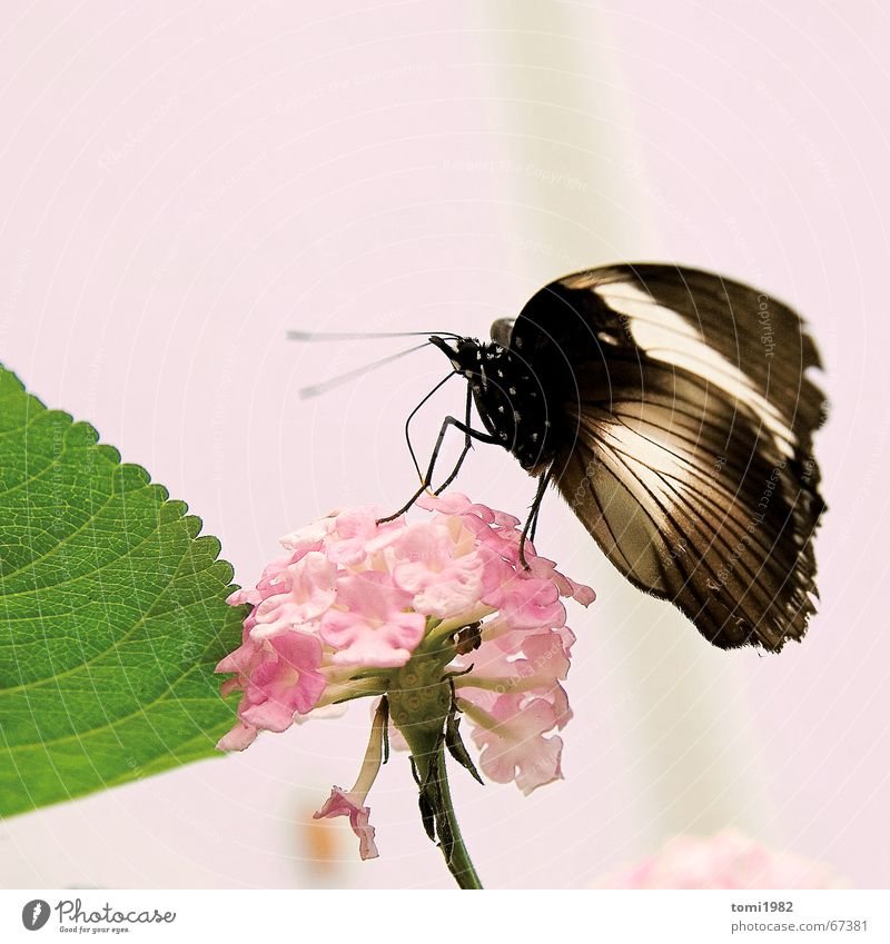 Beautiful Flower Summer Spring Happy Pink Insect Butterfly
