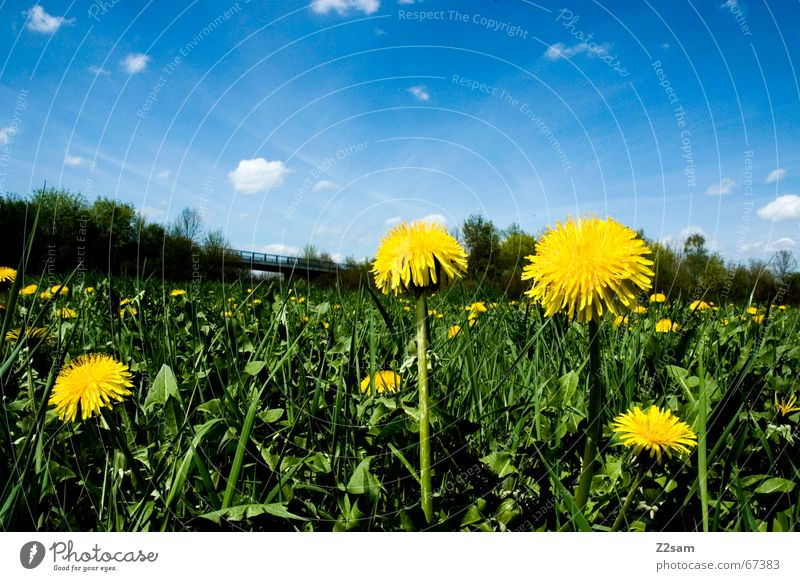 flower meadow Sky blue Clouds Meadow Green Yellow Flower Flower meadow Idyll Flower power Blue Far-off places