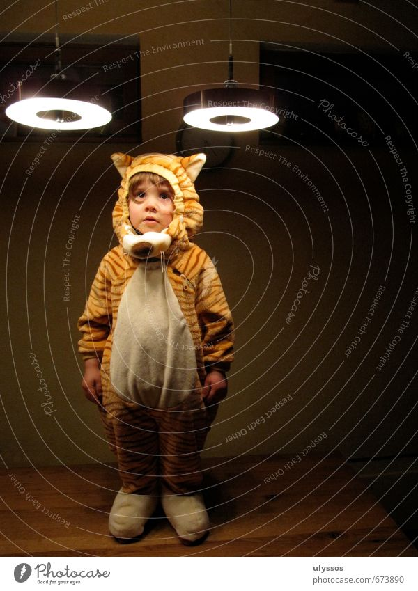 Beam Tiger Playing Carnival Child Cloth Pelt Funny Cute Wild Soft Brown Yellow White Patient Calm Curiosity Colour photo Interior shot Copy Space right