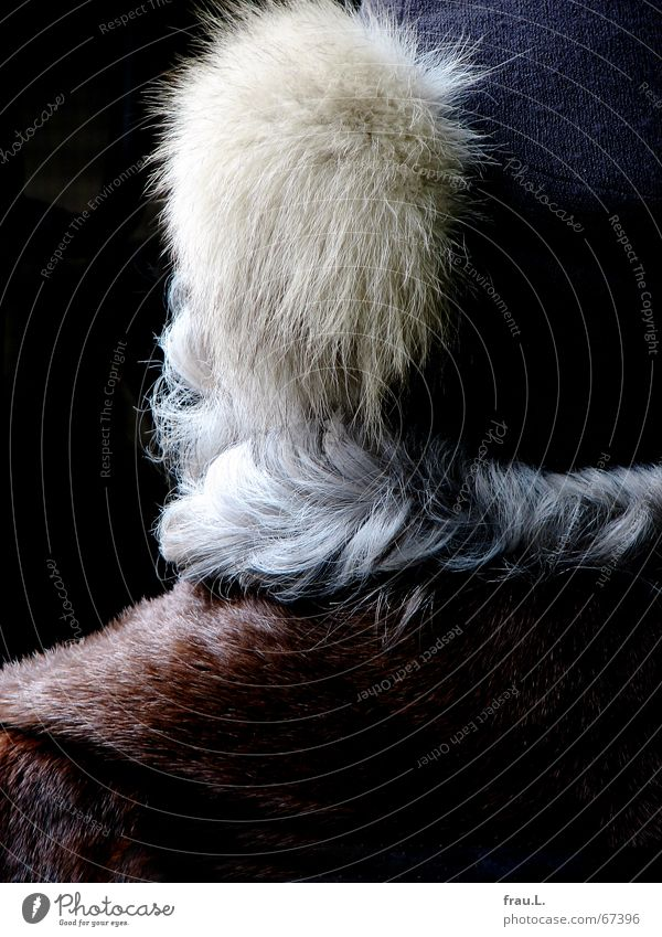 hairy Fur coat Obstinate Paintbrush Controversial Ancestors Fur-bearing animal Heat Gray Baseball cap Waves Hair and hairstyles Pelt Collar Winter Disgust Cold