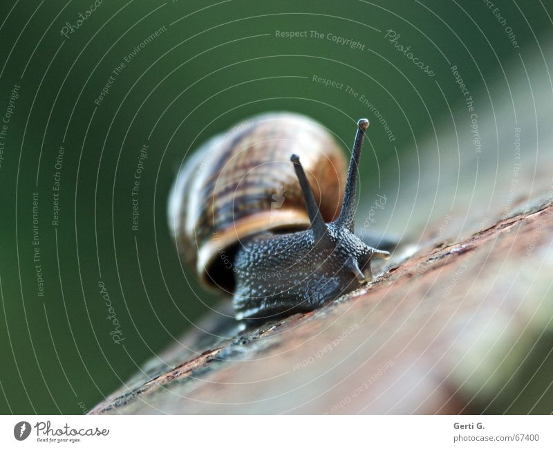 ___o\/ Animal Snail shell Movement Speed Aloof Glittering Smoothness Handrail Crash Risk of collapse Feeler Tentacle schnirkel snail Intoxication Rust Decline