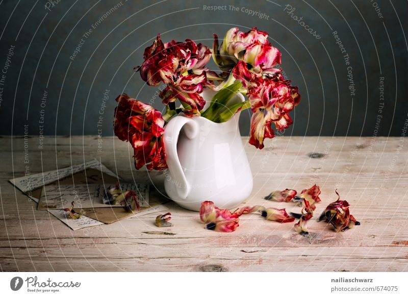 Still Life with Tulips Style Flower Bouquet Vase Letter (Mail) Card Wood Glass Fragrance Faded To dry up Natural Retro Beautiful Gray Red Moody Peace Idyll