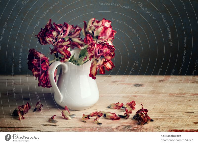 Beautiful Colour Plant Red Sadness Style Wood Natural Elegant Esthetic Blossoming Transience Retro Romance Grief Dry