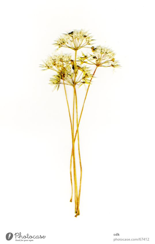 Nature Plant Colour Summer Flower Yellow Blossom Emotions Grass Multiple Individual Dry Delicate Bouquet Stalk Seed
