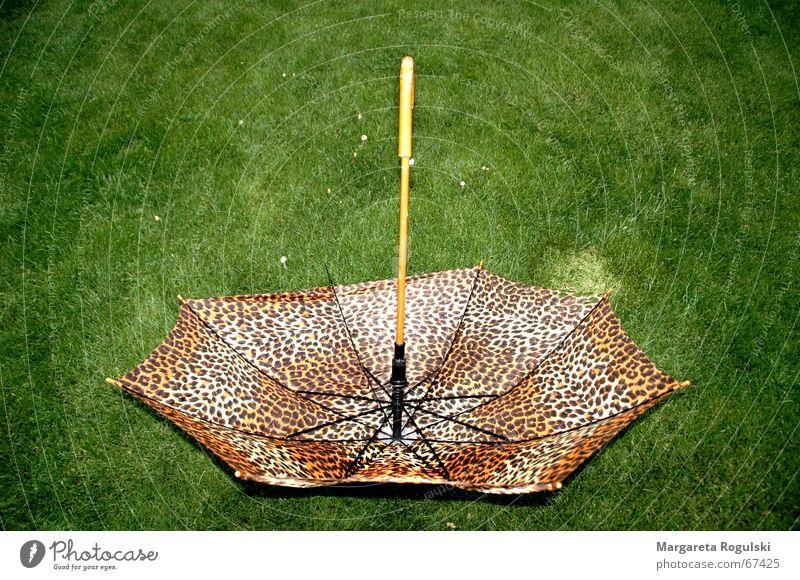 Green Meadow Rain Brown Weather Umbrella Degrees Celsius