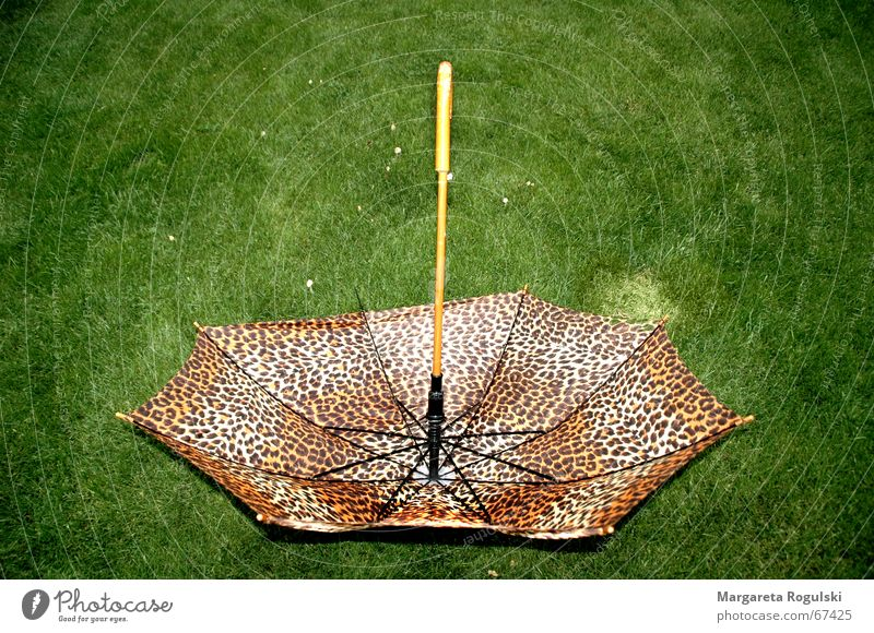 rain makes beautiful Umbrella Meadow Degrees Celsius Green Brown Leopard print Rain Weather