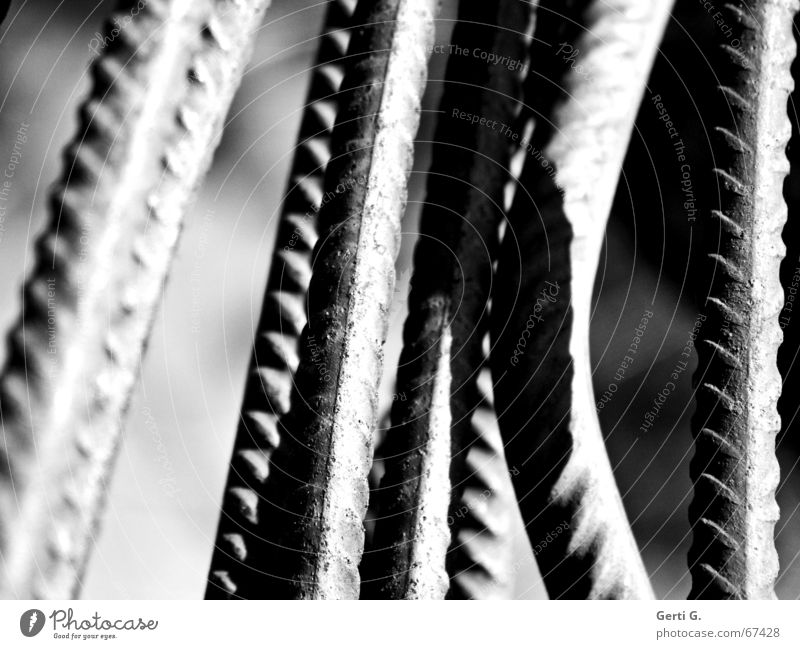 lines Rod Pattern Rough Warped Curved Arrangement handy Shadow garden tool Crazy Line black&white Black & white photo focus gradient Groove beanstalks Tilt