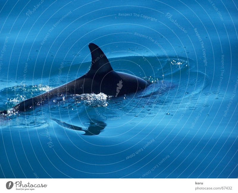 Water Blue Joy Calm Far-off places Life Cold Whale Happy Fresh Energy industry Dive Water wings Slowly New Zealand Dolphin