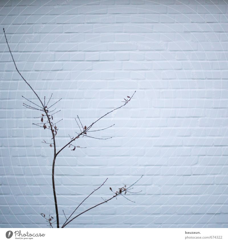 Nature White Plant Tree Winter Wall (building) Autumn Wall (barrier) Spring Gray Wood Stone Line Garden Park Facade