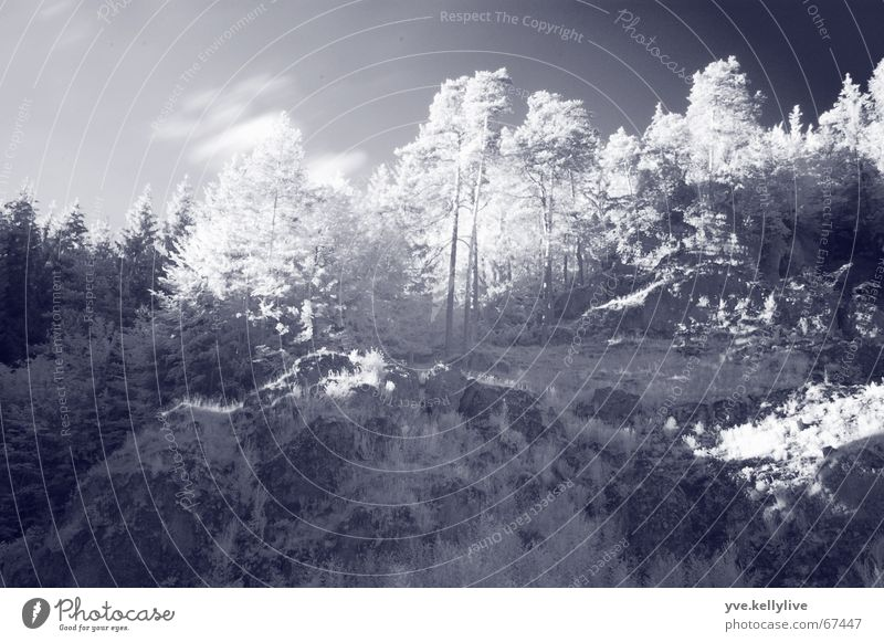 Infrared Tree Photographic technology Mountain Wood effect black and white Sun