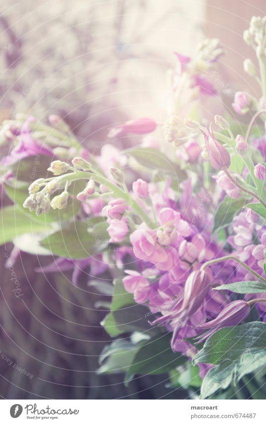 Green Plant Flower Leaf Spring Blossom Pink Blossoming Violet Floristry Verdant