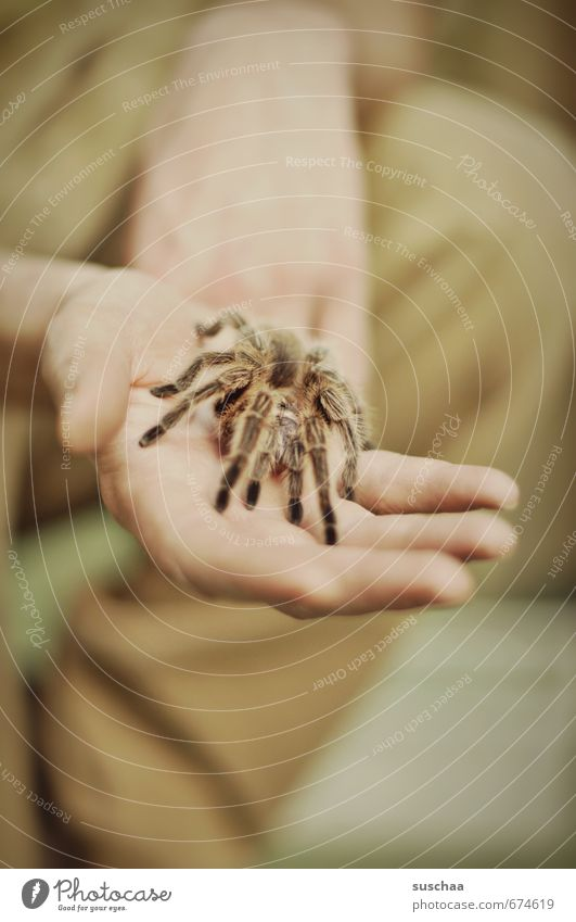 Animal Legs Hair Fear Fingers Threat Zoo Exotic Disgust Spider Love of animals Bird-eating spider