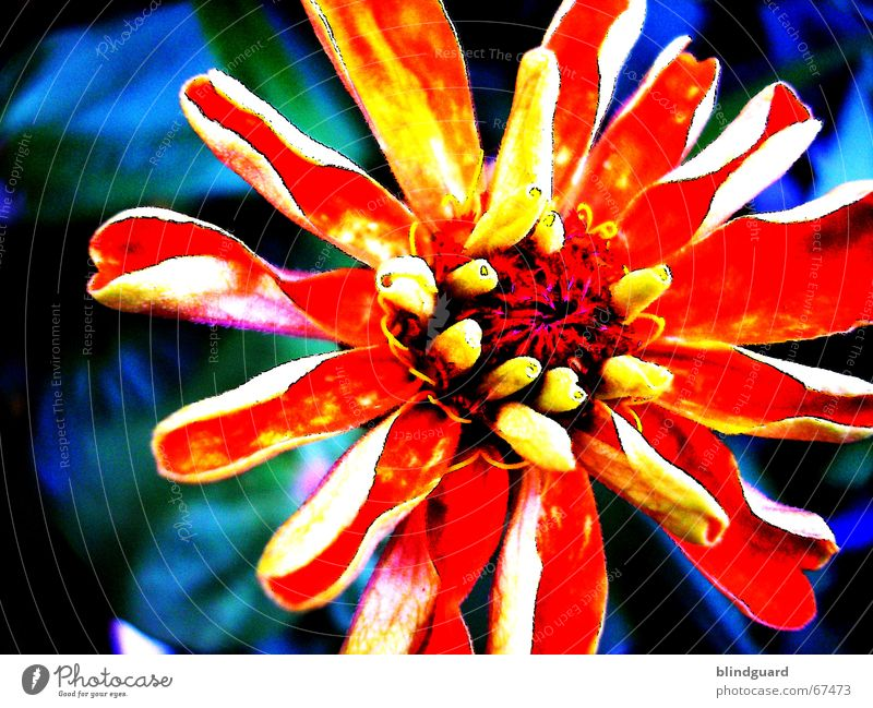 Bright colours Flower Blossom Yellow Blossoming Processed oragne Garden Nature Colour Faded stylized alienated saturation Contrast Illuminate