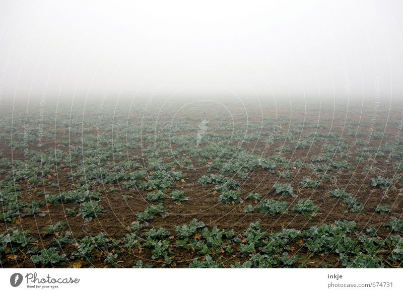 early on the field | spooky agriculture Agriculture Forestry Earth Air Horizon Autumn Winter Climate Bad weather Fog Plant Agricultural crop Field Deserted