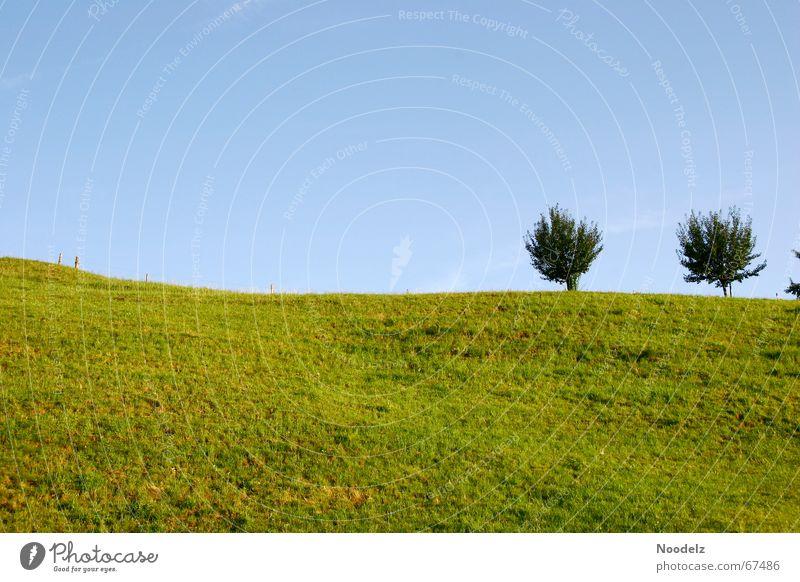 Beautiful Sky Tree Green Blue Far-off places Dark Meadow Freedom Bright Vantage point Hill Juicy Azure blue