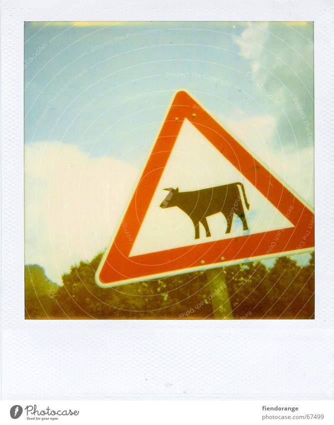 attention cow Cow Road sign Bull Alps Signage Mountain vacation:polaroid Respect