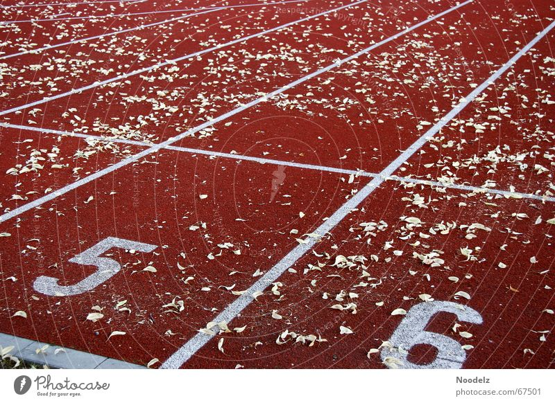 run run run Racecourse Red Leaf Line Endurance Exterior shot Digits and numbers Signs and labeling Walking Sports