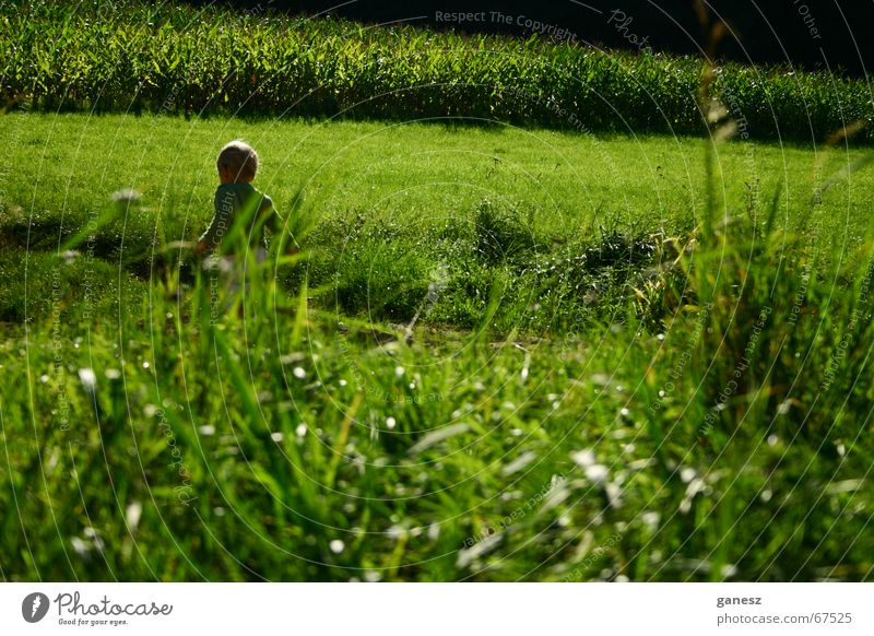 Child Green Summer Grass Freedom Field