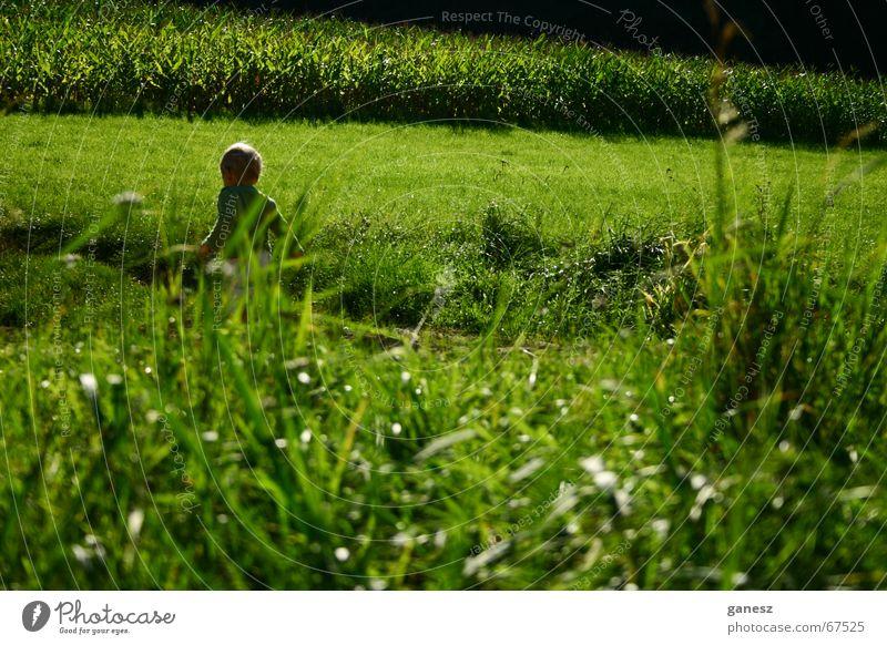summer Summer Grass Green Field Child sun Freedom