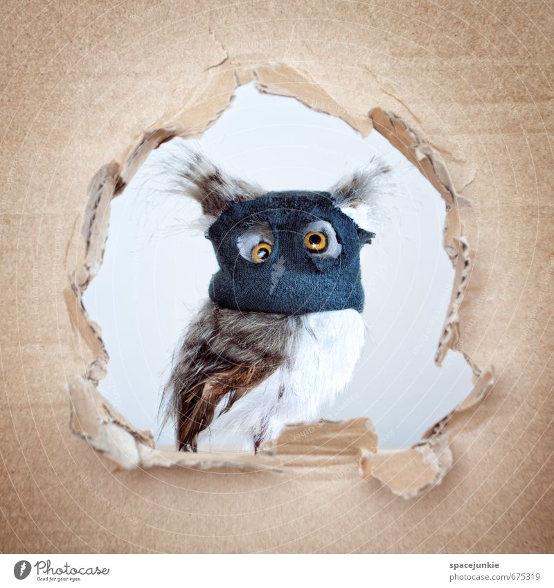 robber owl Animal Wild animal Bird 1 Sadness Exceptional Cool (slang) Creepy Uniqueness Kitsch Curiosity Cute Rebellious Crazy Blue Yellow White Love