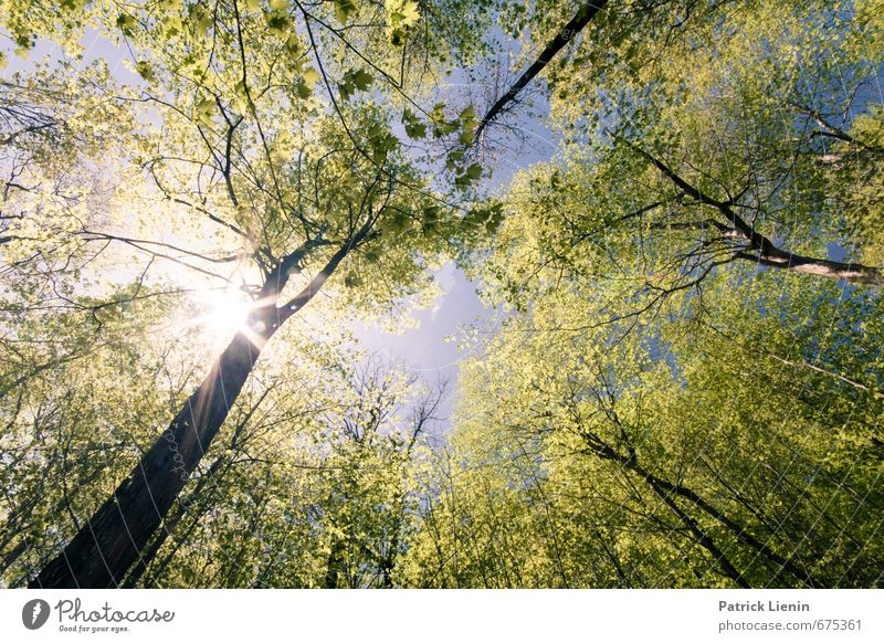 Explosions In The Sky Environment Nature Landscape Elements Air Spring Summer Climate Beautiful weather Plant Tree Forest Adventure Fragrance Loneliness