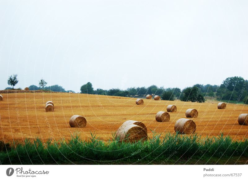 hay bales Straw Hay bale Bale of straw Field Meadow Grain Landscape