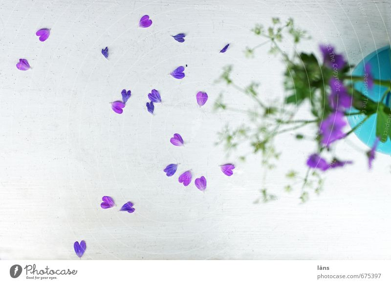 sincerely your... Flower Blossoming Vase Leaf Faded Window board Fallen