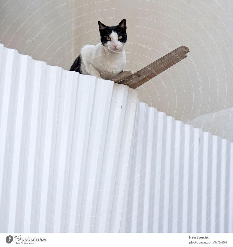 Cat City White House (Residential Structure) Animal Black Building Wood Brown Metal Facade Sit Wait Cute Fence Facial expression