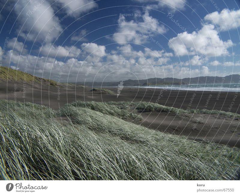 Finally... Beach Grass Blown away Clouds Horizon New Zealand Calm Come Exterior shot Wide angle black sand Far-off places Power Sky