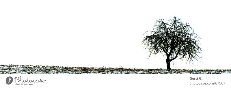 lonely Tree Nature Field Winter Individual Loneliness Leaf Cold Snow Seasons lonesome Branch leafless branches Sparse
