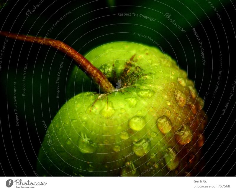 Green Dark Fruit Nutrition Drops of water Delicious Stalk Anger Harvest Apple Fruity Crunchy Apple tree Hydrophobic Garden fruit Droop