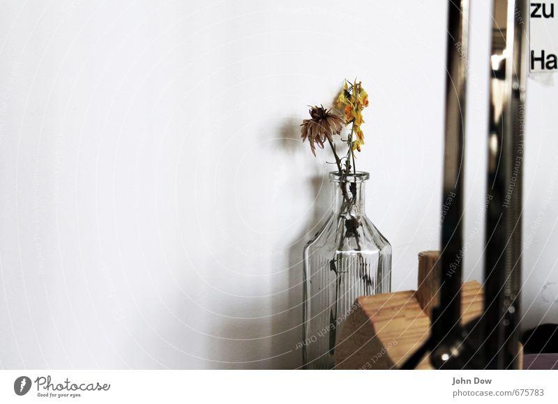 leave sb./sth. Interior design Decoration Plant White Past Transience Growth Change Living or residing Vase Glass Glassbottle Stalk Limp Dried flower