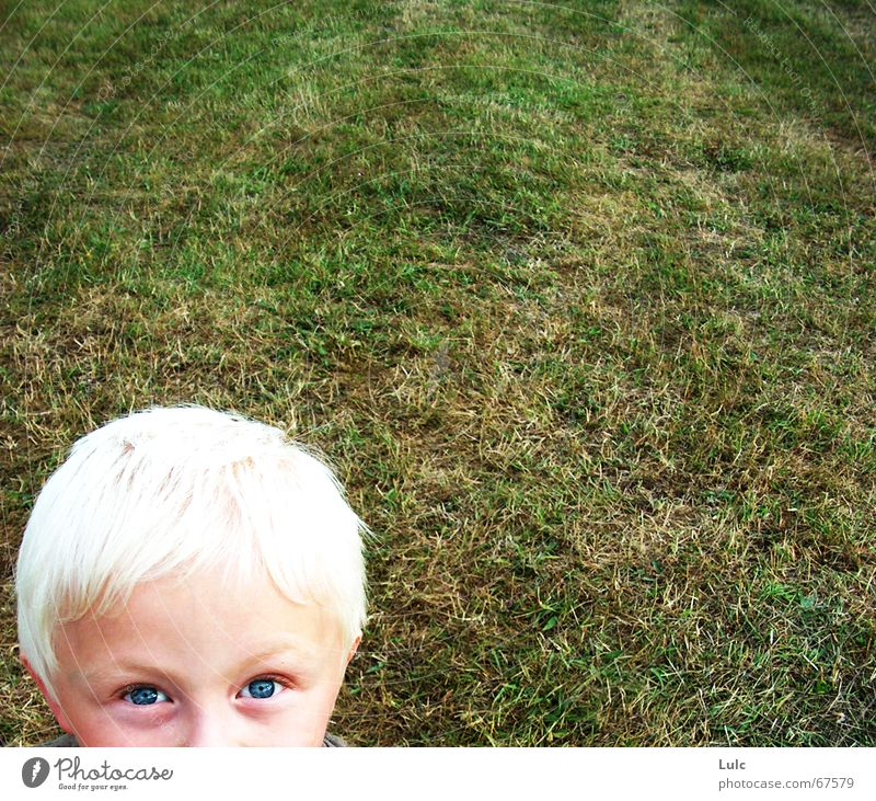 Peekaboo! Blonde Child Human being boy grass eyes head
