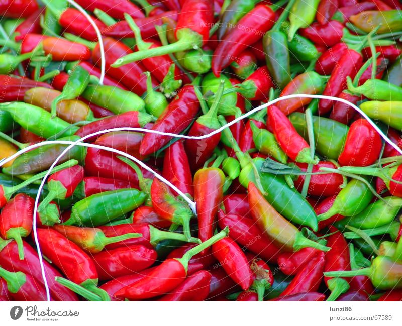 Green Red Tangy Herbs and spices Poison Chili Vegetable Vegetarian diet Spicy