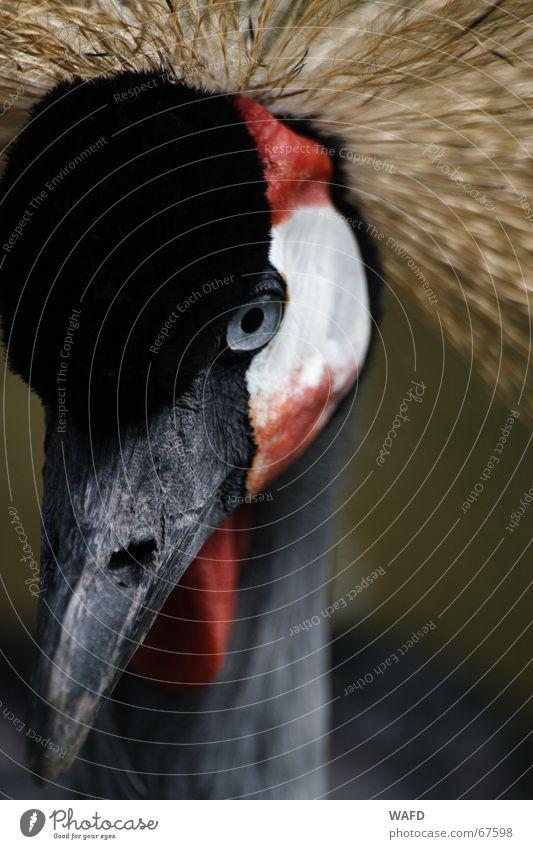 Eyes Bird Observe Curiosity Zoo Treetop Beak Mistrust Hagenbeck zoo