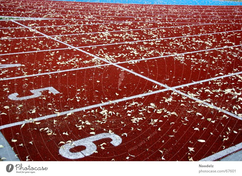 fin track Red Summer Leaf Exterior shot Walking Sports Railroad Digits and numbers Line Nature