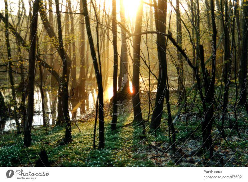break of dawn Morning Twilight Sunbeam Forest Tree Fog Meadow Water