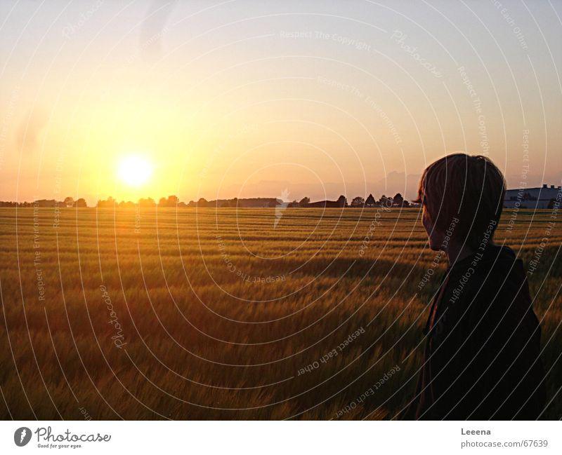 Sky Sun Field
