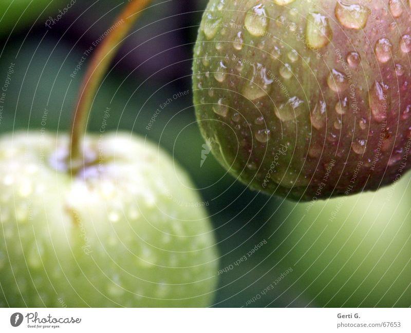 Green Dark Fruit Nutrition Drops of water Delicious Stalk Anger Harvest Apple Fruity Crunchy Apple tree Hydrophobic Garden fruit Droop