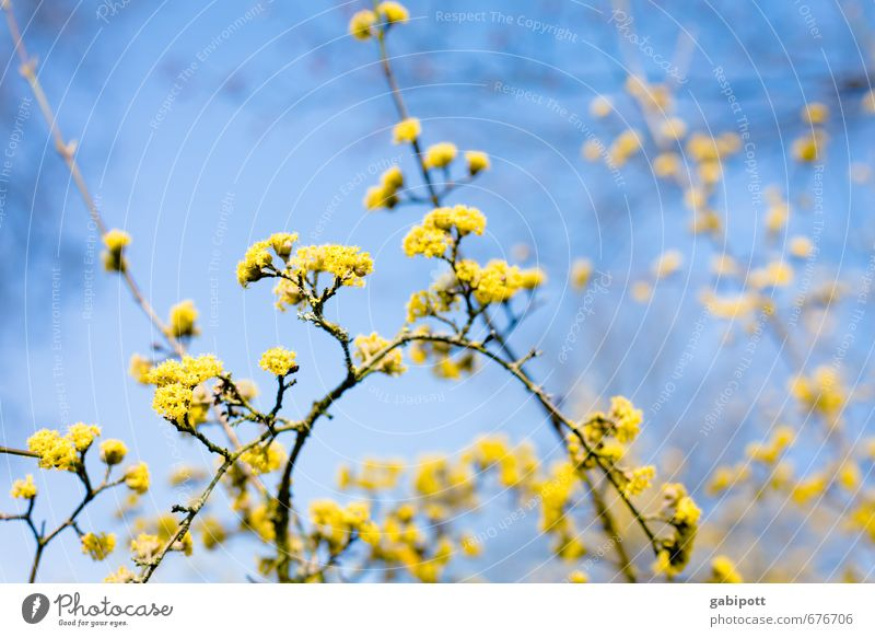 Flowering plant II Nature Sky Sun Sunlight Spring Beautiful weather Plant Tree Bushes Blossom Blossoming Friendliness Happiness Natural Positive Warmth Blue