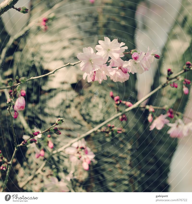 Nature Plant Tree Landscape Environment Spring Blossom Natural Garden Pink Park Wild Beautiful weather Happiness Soft Blossoming