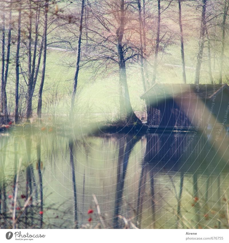 lair Nature Landscape Water Tree Grass Bushes Berry bushes Lakeside Pond Stripe Observe Brown Green Loneliness Calm Protection Stagnating Pallid Delicate