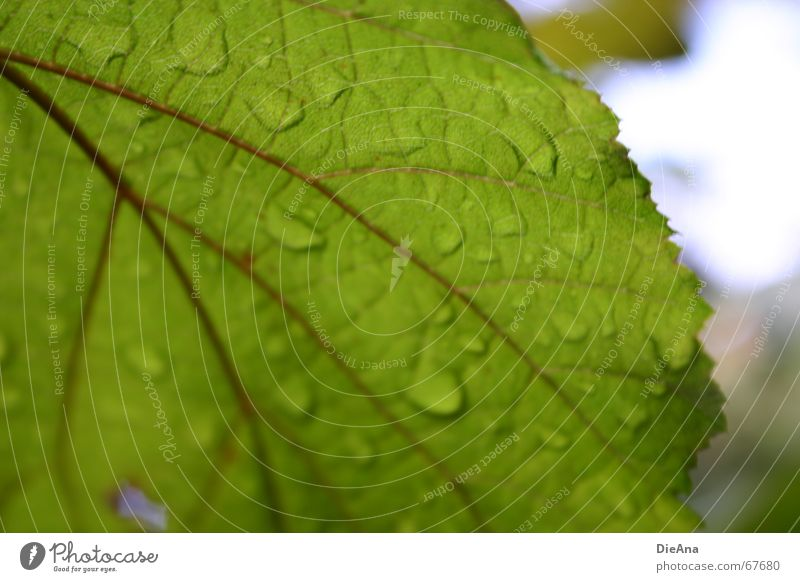 repelling Leaf Rachis Rain Plant Summer Green Sky Nature Blur raindrops