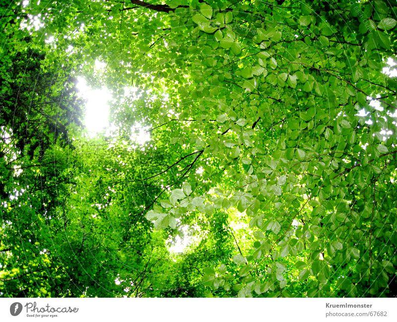Green leaf blanket Forest Leaf Tree Summer Sun Branch Sky Bright spot Warmth