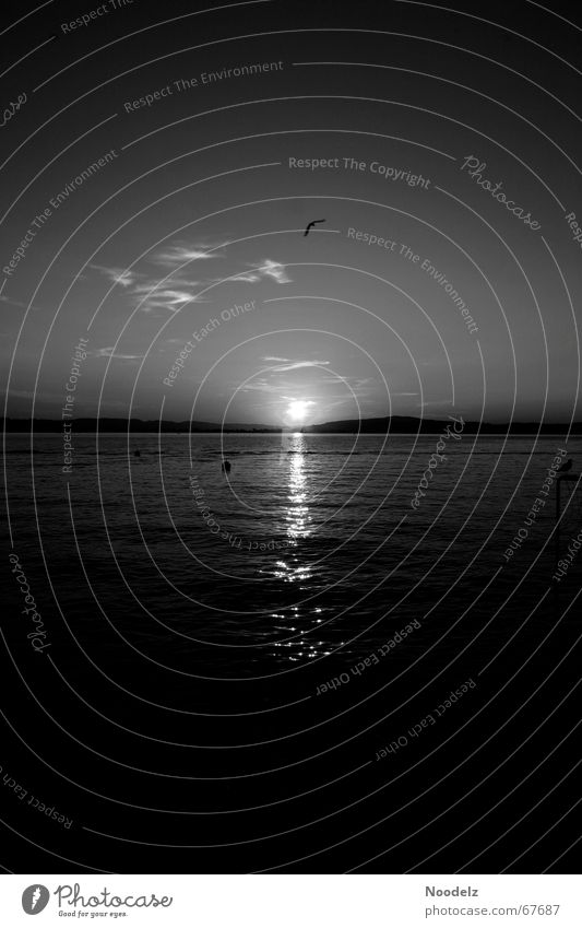 Desert Lake Dark Bird Black White Gray Buoy Water Sun wok Sky
