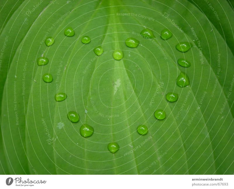 ___water feelings?! Leaf Romance Heart Water Love Nature Creativity Passion Emotions