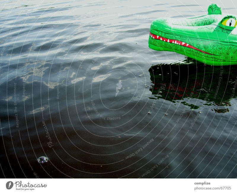 Vacation & Travel Green Summer Ocean Joy Animal Eyes Funny Playing Swimming & Bathing Lake Air Fear Waves Infancy Swimming pool