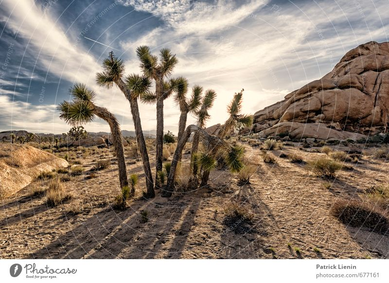 charity Environment Nature Landscape Plant Elements Sand Air Sky Clouds Sun Beautiful weather Warmth Drought Tree Grass Bushes Adventure Whimsical USA